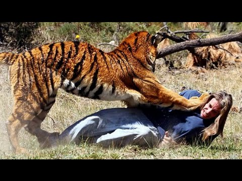 Wild Animals Attack On Human 2016-Documentary HD