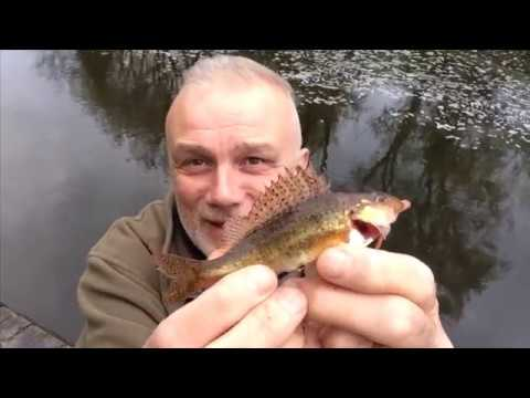 Bream, Perch And Ruffe On The Canal (1211)