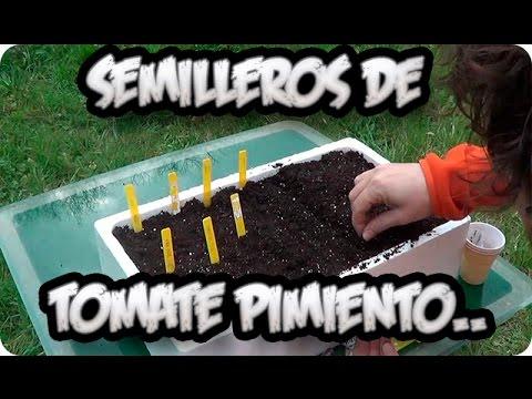 Como Hacer Semillero de Tomate, Pimiento Y Berenjenas || Huerto Organico || La Huertina De Toni