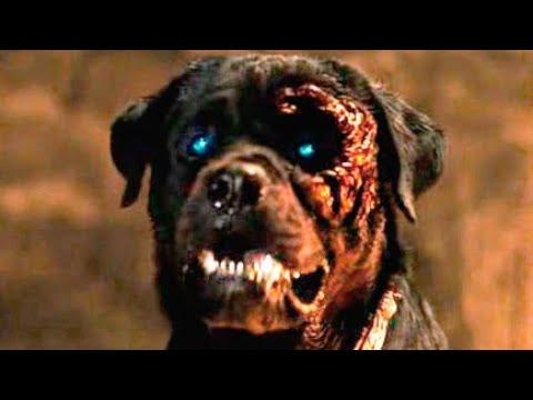 Trailer do filme O Estado do cão