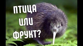 Почему Птицу Киви так назвали?   И почему она не летает?
