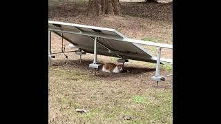 식빵굽는 고양이