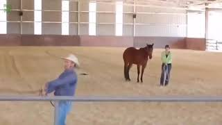 Приколы с лошадьми , ржал до слез 😂😂😂😂😂😂
