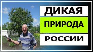 Дикая природа России это канал Геннадий Мацинов какая замечательная природа, а мир дикой природы!