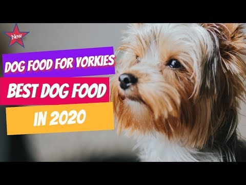 Best Dog Food For Yorkies in 2020 | 5 Best Dog Food for Yorkies Puppy.