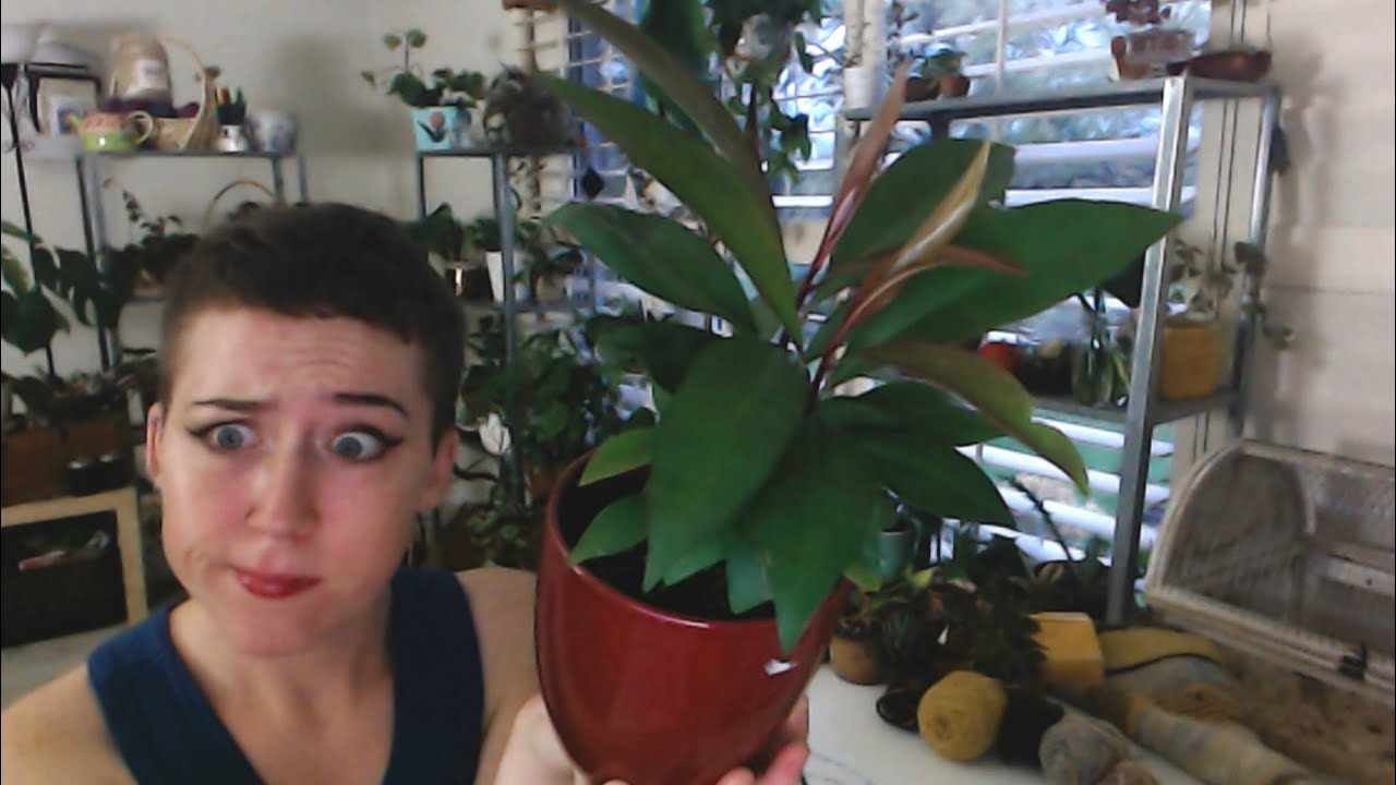What plant is this!? Symptoms, feelings, and Autumn things. Come or a chat! | Last Minute Laura
