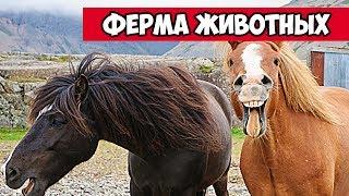 Конь гитарист - ферма веселых животных | Bazuzu Video ТОП подборка июль 2017