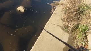 汚い川で 延べ竿の五目釣り thumbnail