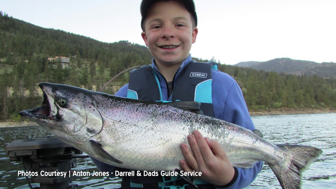 How to Catch Chelan Chinook 2019-06-27