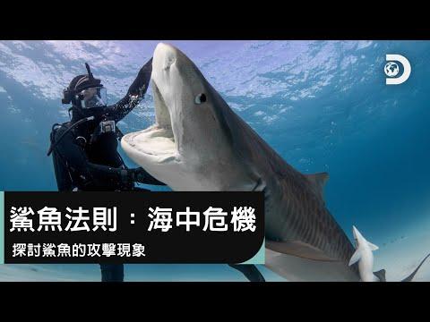 鯊魚的攻擊現象,是鯊魚自然的物種行為,還是人類行為造成?-《鯊魚週2019》鯊魚法則:海中危機