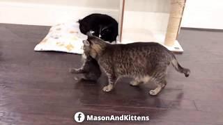 grandpa-mason-stockpiling-kittens-in-his-yurt-tinykittens-com
