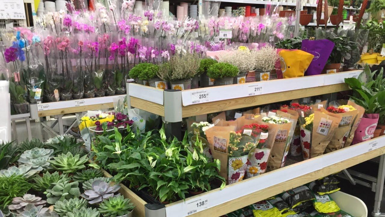 Леруа Мерлен Комнатные растения и Цветы. Новый обзор Большой ассортимент комнатные цветы и растения.