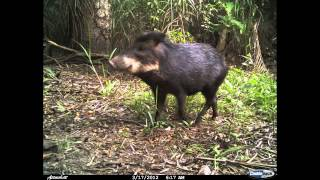 Camera Trap Photos of the Southern Pantanal