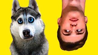 ДЕНЬ НАОБОРОТ! (Хаски Бандит) Говорящая собака