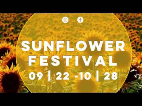 Sunflower Fest 2018 Holland Ridge Farm Youtube