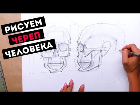 Как нарисовать череп — Kalachevaschool.ru — Поэтапный мастер-класс Дарьи Остапенко