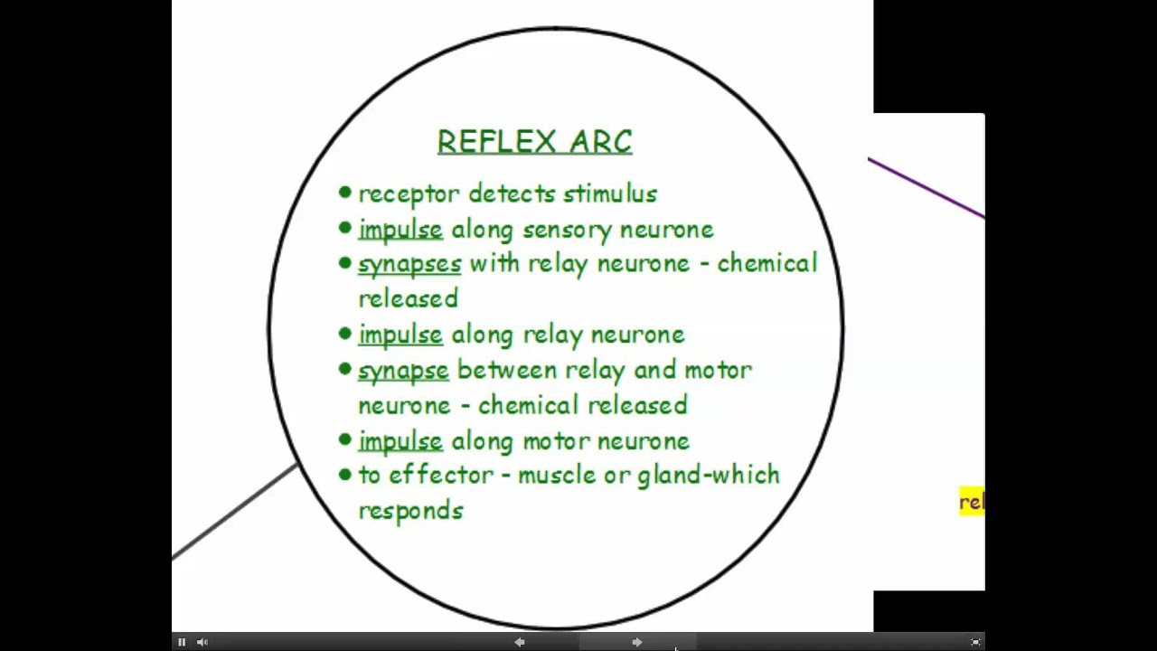 Aqa gcse science unit 1 biology the nervous system youtube aqa gcse science unit 1 biology the nervous system ccuart Image collections