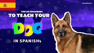 Teach Your Dog Commands In Spanish (20 Common Words)