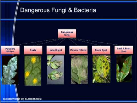 Plant Health & Disease Troubleshooting Guide