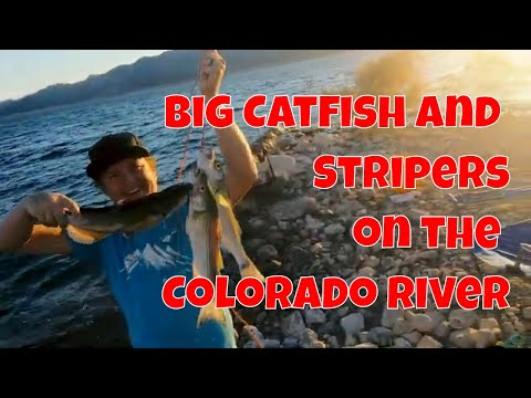 Catching Stripers And Catfish On The Colorado