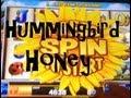 Hummingbird Honey Slot Machine Bonus Win - A Quickie! ~ Bally's