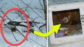 Their Hearts Broke When They Peered Inside This Box And Saw Kitten Who Freezing In The Snow