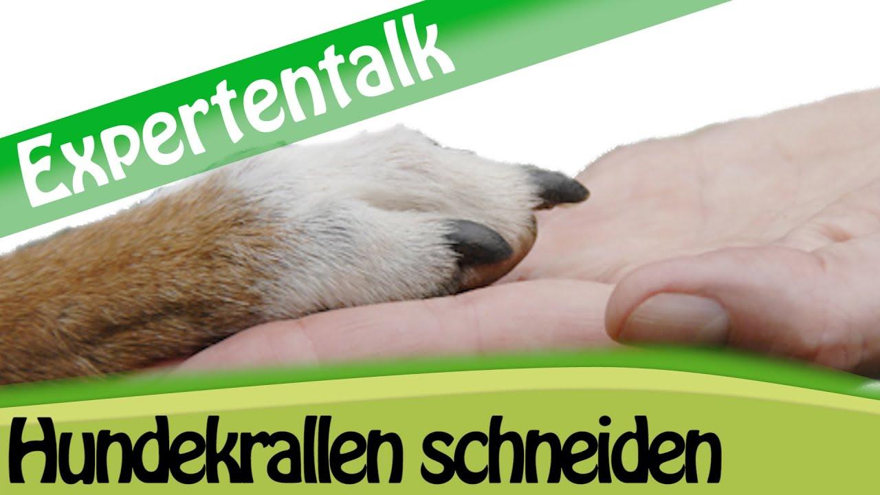 Krallen Schneiden Beim Hund - Tipps Fu00fcr Zuhause - Expertentalk - YouTube