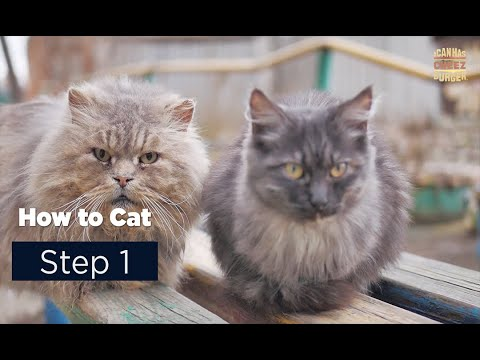 How To Cat: Step 1