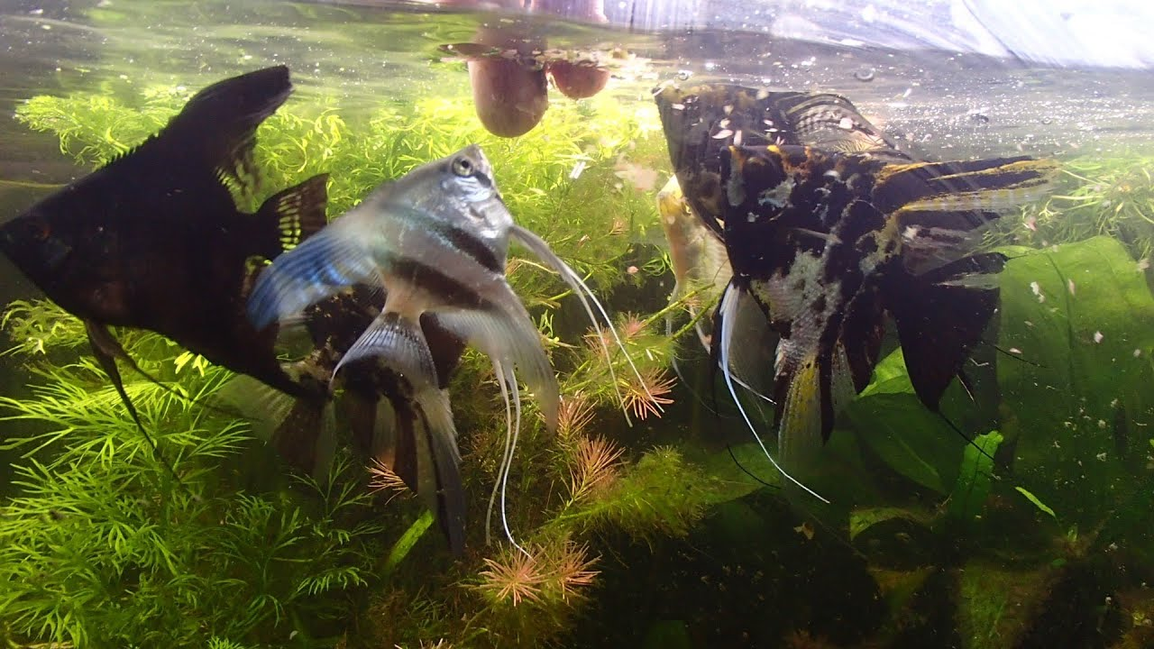Fluval foods how much often do i feed fish how what to for How often to feed fish