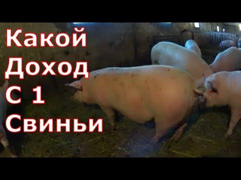 Какой доход с одной свиньи
