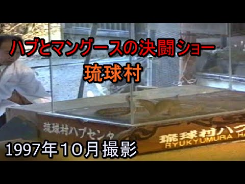 ハブ対マングース ~20年前の貴重映像  琉球村~  Havu VS Mongoose Show