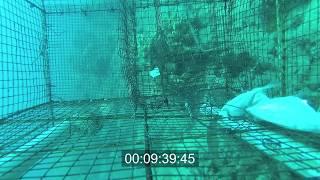Underwater Camera Fish Trap!!!