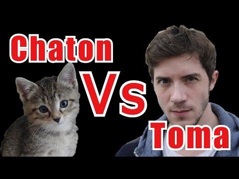 Chaton Vs Toma