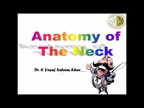 Anatomy of Neck (Complete)