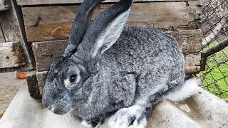 Сколько сена ест кролик ?//Немного новостей //Жизнь в деревне !!!