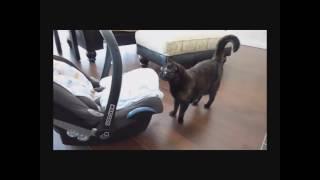 Кошки знакомятся с детьми