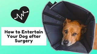 Entertaining Your Dog after Surgery