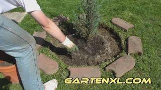 Säulenwacholder / Blauer Raketen-Wacholder mit Mähkante und Gartenvlies / Unkrautvlies pflanzen