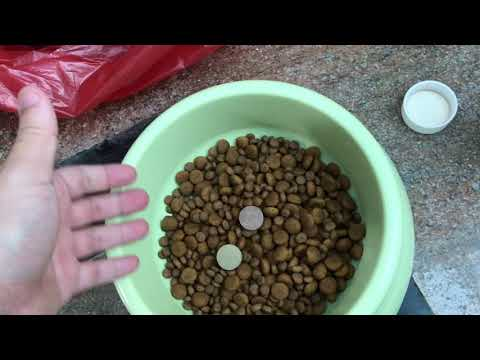 ROYAL CANIN MAXI JUNIOR REVIEW ON MY 7 WEEKS CANE CORSO PUPPY