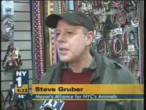I Love NYC Pets (NY1 covers ASPCA Adoption Event)