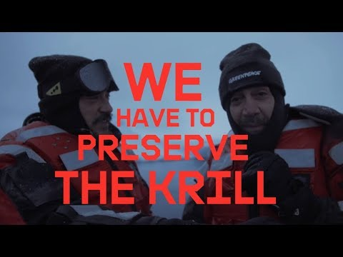 WHY WE HAVE TO PROTECT ANTARCTIC KRILL