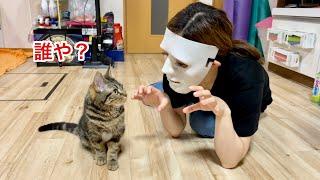 子猫の目の前に突然不審者が乱入した時の反応がこちらですw