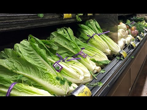 BIGVON -  LETTUCE UPDATE: Some Romaine Okay To Eat Again!