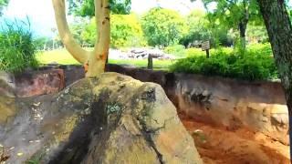 № 1132 США Львы, гиены, суслики, жирафы Орландо Флорида