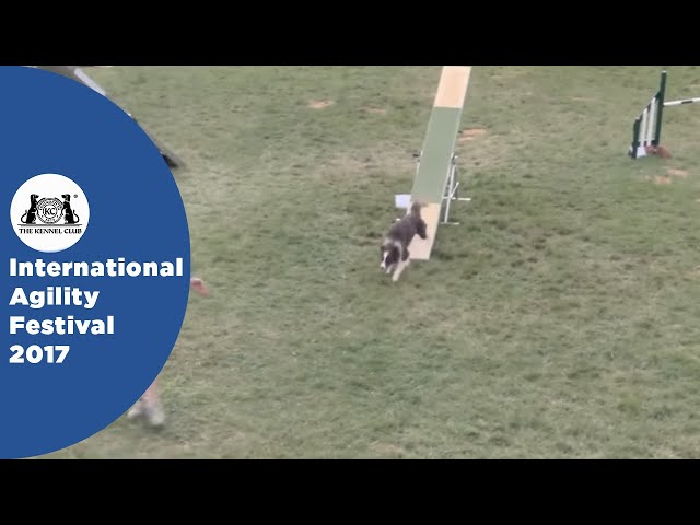 Nations Cup Final Large - Part 3 | International Agility Festival 2017
