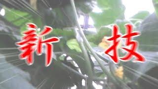 葉と蔓、蔓と蔓とで誘引!!本日はお疲れさまでした!!/きゅうり農家/きゅうり栽培/愉快なshata農園 thumbnail