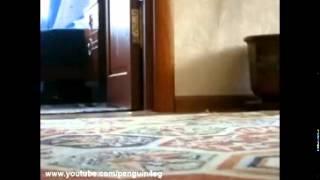 Кот уходит красиво