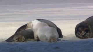 """Копия видео """"звери природа животные"""""""