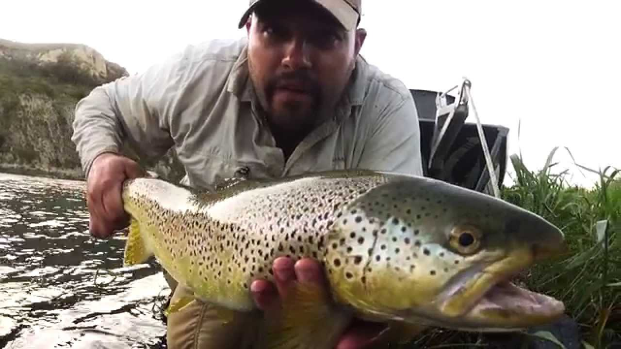 World Record Brown Trout 2013