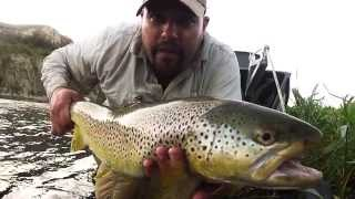 High Water Brown Trout, Bow River Fly Fishing Guides, Calgary AB